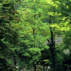 Foto dei nostri suggestivi boschi nella frazione di Anduins- Foto di Soravito